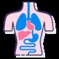 anatomy e1618911532891